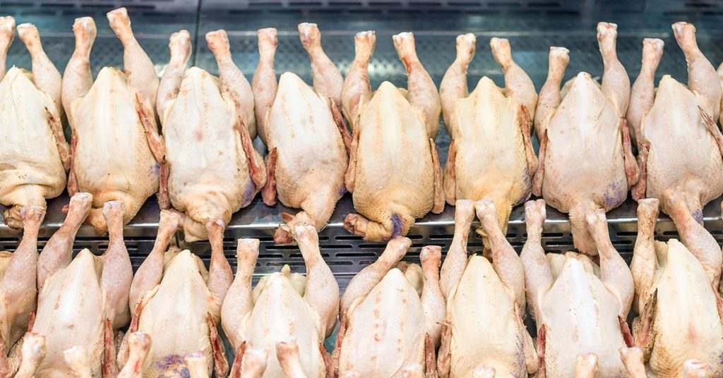 Aging Chicken Meat