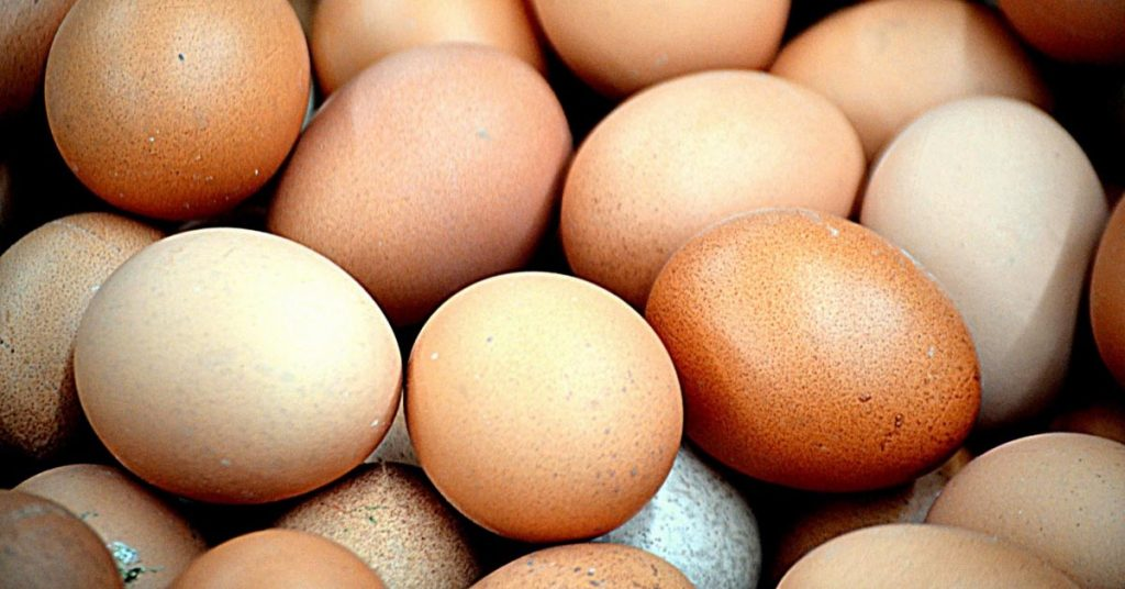 Egg Layers