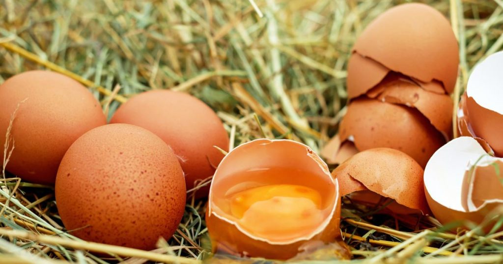 Food for Egg Layers