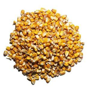 Whole Corn Chicken Feed