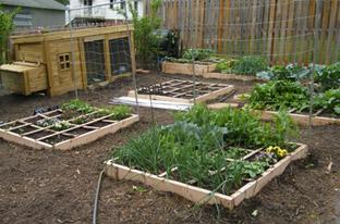 Herb Garden Coop Asheville, NC